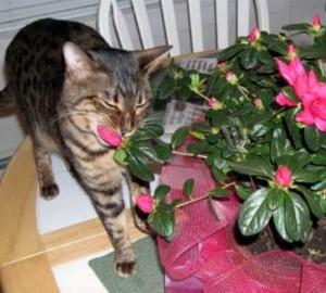 Ядовитые комнатные растения у вас