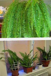 растения в викторианском декоре интерьера