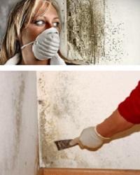 как удалить грибок со стен