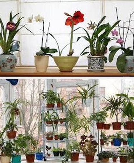 как украсить интерьер домашними цветами