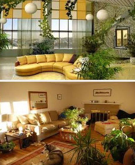 декор комнаты с живыми цветами