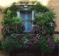 что посадить на балконе