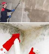 как бороться с плесенью на бетоне